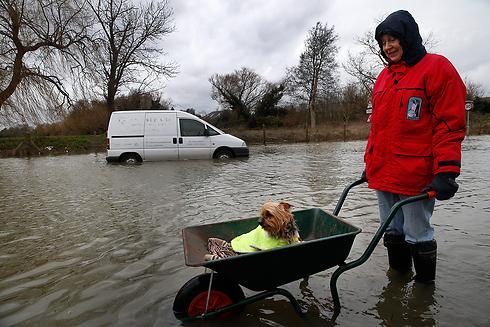 גם בעלי החיים נזקקו לעזרה (צילום: AP)