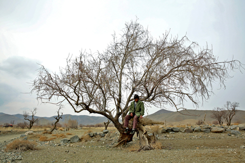 Gardener sits on tree near Lake Oroumieh. Rescuing the lake was one of the campaign promises of Iran's new president, Hassan Rouhani (Photo: AP) (Photo: AP)