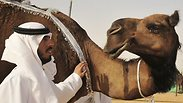 Saudis support their camels Photo: Reuters