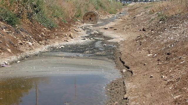 המים המזוהמים ממשיכים לקישון (צילום: ניצן מתן, באדיבות עמותת צלול)