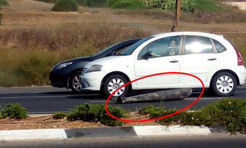 Part of rocket fired at Tel Aviv falls near Nes Ziona after being intercepted by Iron Dome (Photo: Dor Asayag)