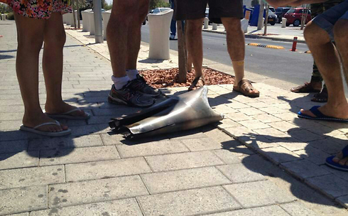 Shrapnel of rocket intercepted by Iron Dome over Tel Aviv (Photo: Moran Biran)