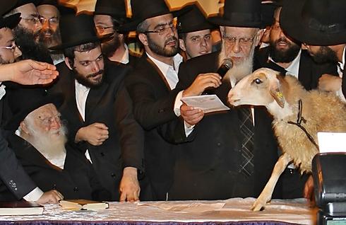 Photo: Yaakov Cohen