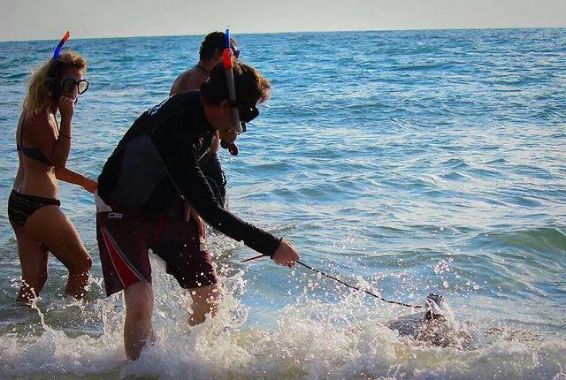 צילום: דליה חלפון, מתנדבת במרכז להצלת צבי הים (צילום: יניב לוי, רשות הטבע והגנים)