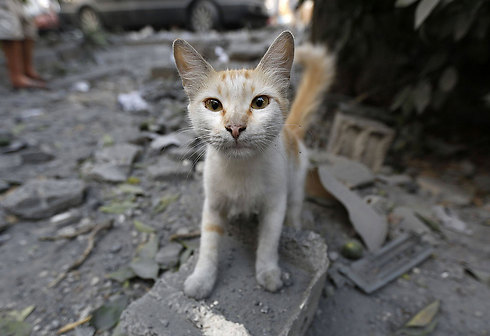A cat in the wreckage of the Basha Tower in Gaza City (Photo: AFP)
