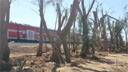 Protective forestation of Ashkelon-Sderot train route