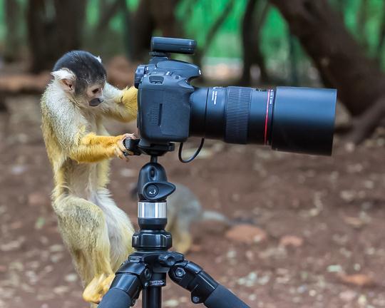 תמיד טענתי שלא ציוד הצילום הוא החשוב בתמונה אלא העין שמאחורי העדשה (צילום: ג'קי סויקיס)