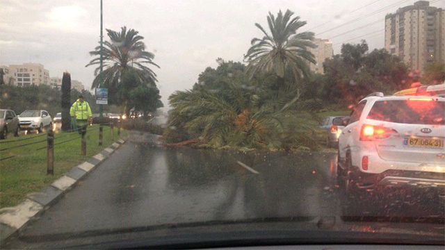 Tree blocking Namir Boulevard (Photo: Noam Yehoshua)