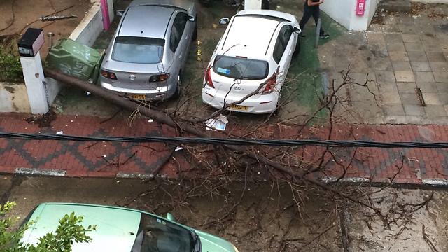 Fallen tree in central Tel Aviv