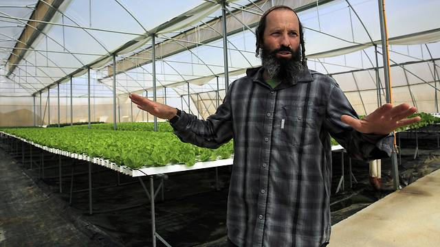 Farmer Gilad Fine at his greenhouse (Photo: AP)