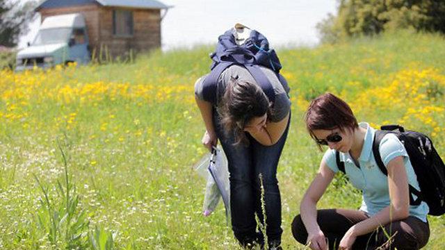 איסוף פרחים למחקר (צילום: באדיבות מכללת הדסה )