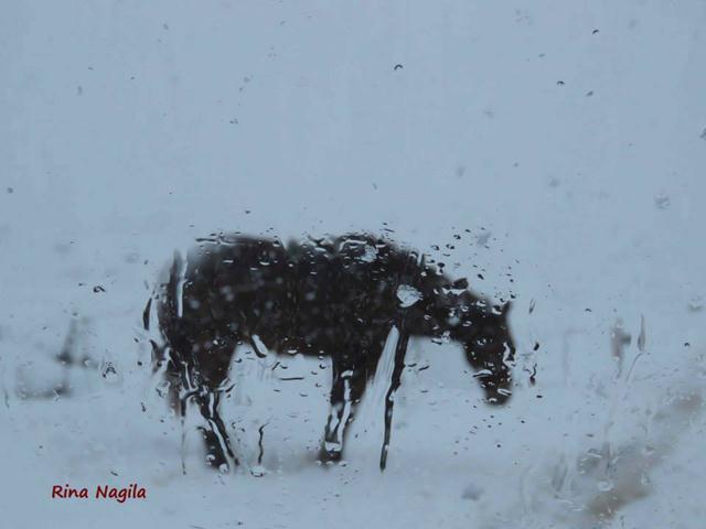 (צילום: רינה נגילה, קיבוץ אורטל)