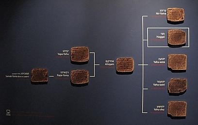 """""""הלוחות האלה יצרו ענפי משפחה שלמים של גולי יהודה בבבל, למשל, אנשים שעד לגילוי הארכיון לא ידענו דבר עליהם או על המקום שבו הם חיו"""" (צילום: אבי נועם)"""