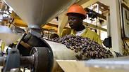 מלכת הקקאו מאפריקה מגלה את השוקולד