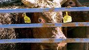 צילום: צילום: אנונימוס לזכויות בעלי חיים