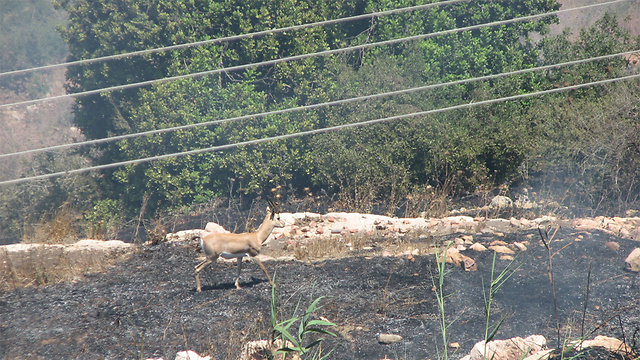Firebombs believed to be cause of Jerusalem-area blazes