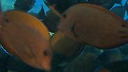 צילום: צביקה (זיגי) לבנת