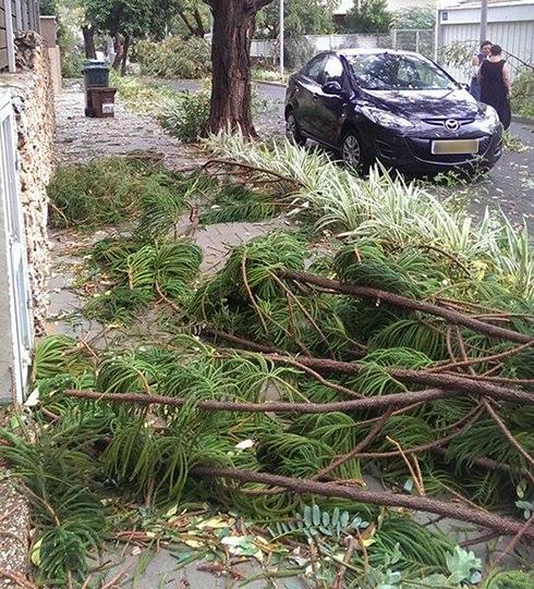 נזקי הסערה בשבוע שעבר  (צילום: דנה כהן בראון)