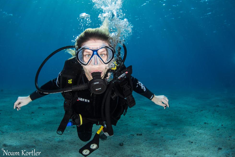ספיישל: ספארי צלילה בעולם