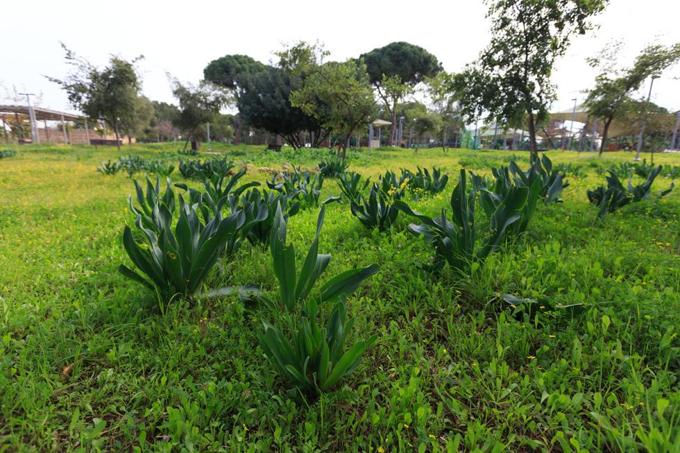 על 3 הדונם שהעירייה מקצה לשלב א' של הפרויקט יגדלו סוגים שונים של צמחים, לפי החלטת התושבים והצוות המקצועי שילווה אותם ( צילום :דור נבו )