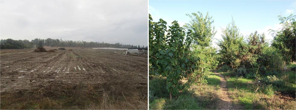 התצלומים מציגים את התלות של החקלאות המודרנית במערכות לא טבעיות כמו ריסוס ודישון. מיד לאחר שננטש מטע האפרסקים (משמאל) הוא הפך לשדה טרשים. שנים ספורות לאחר הקמת יער המאכל, הוא פורה ומניב מתמיד ( צילום: יער המאכל בקדרון )