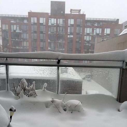 מבט מהמרפסת בברוקלין  (צילום: ג'ק מרטין )