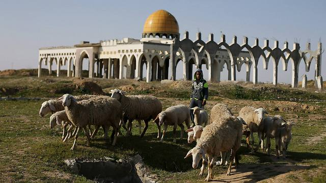 A Palestinian boy herds sheep in front of the ruins of Yasser Arafat International Airport (Photo: Reuters)