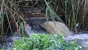 צילום: יונתן שביט, ראש תחום סביבה, רשות נחל קישון