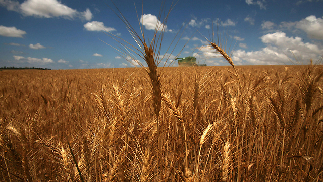 New discoveries on the domestication of barley. (Archive Photo: AFP)