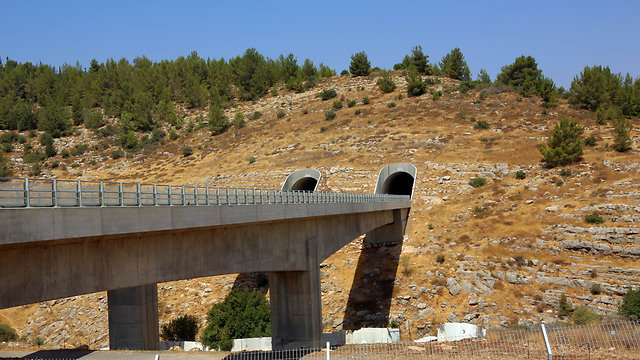 Bridge 8 (Photo: Sasson Tiram)
