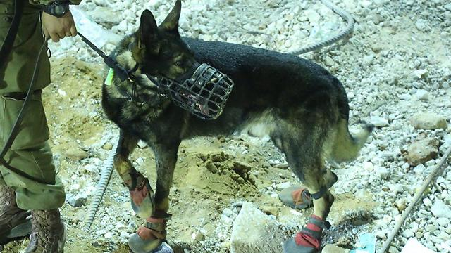 Oketz Unit dog searching for surivors under the wreckage (Photo: Motti Kimchi)