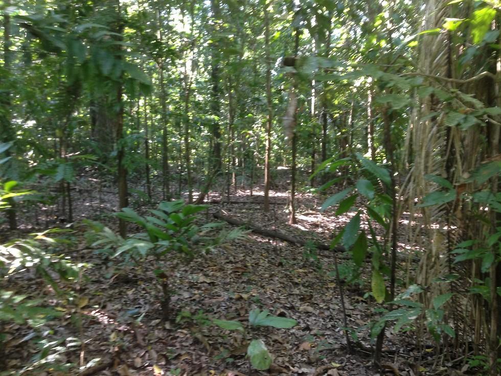 הג'ונגל ליד אגם צ'אללאן (צילום: ניר פדרבוש)