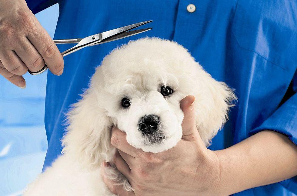 הספרית טענה כי בני הזוג לא הזהירו שמדובר בכלב מסוכן (המחשה: ShutterStock)
