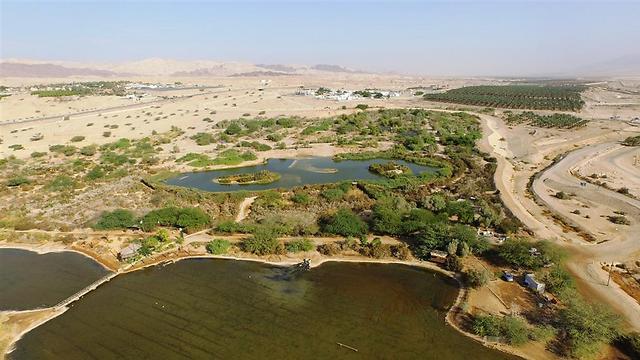 פארק הצפרות באילת (צילום: דב גרינבלט, החברה להגנת הטבע)