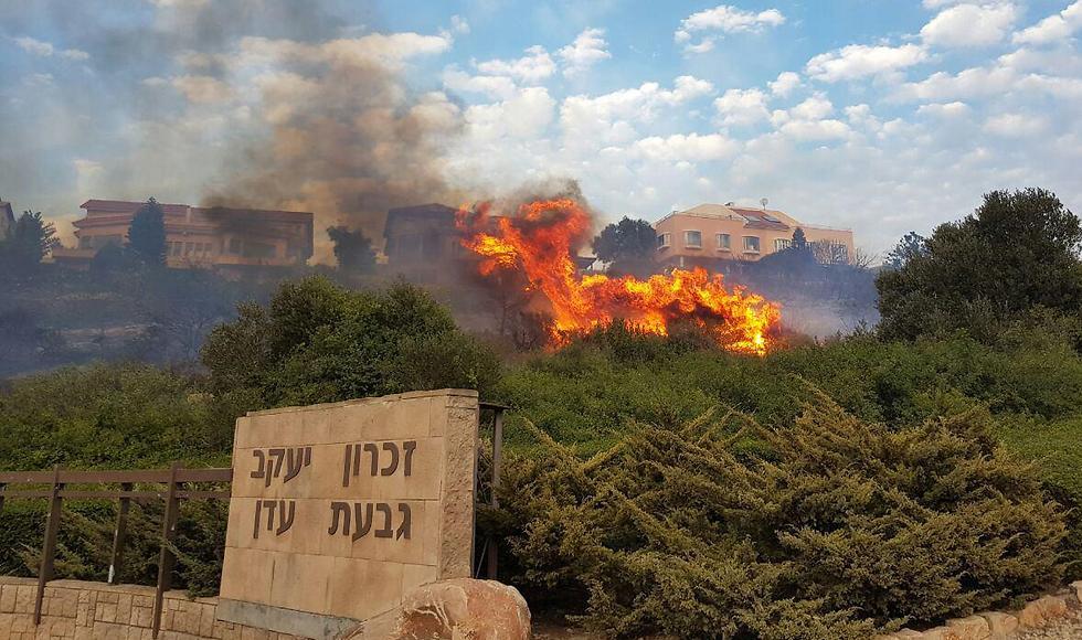 The fire in Zikhron (Photo: Elad Gershgoren)