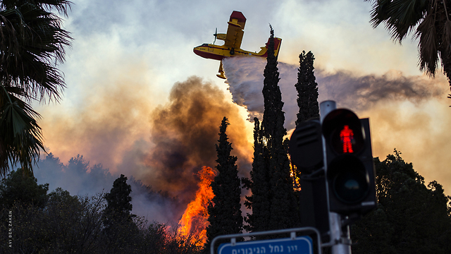 Fire in Haifa (Photo: Avi Ben Zaken)