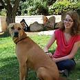 הכלב הוגו צילום: 'ירושלים אוהבת חיות'