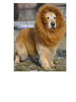 מתוך ebay.com