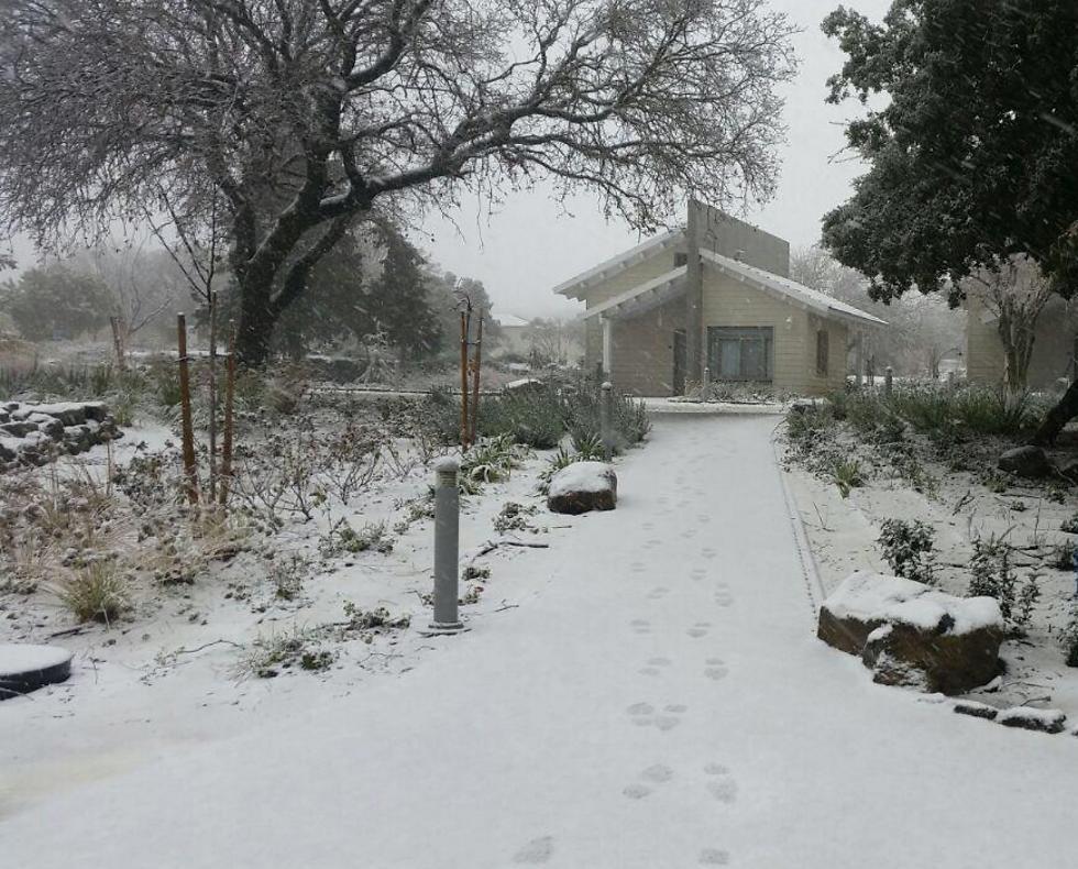לבן על לבן: כך נראה הקיבוץ בעונת החורף המושלגת (באדיבות תיירות עין זיוון)