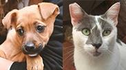 """צילום:  הכלבים שבצל, צער בעלי חיים ר""""ג"""