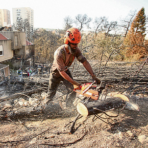 Charred trees in Romema neighborhood following the November fire