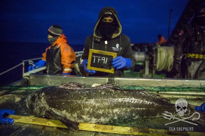(צילום:  Sea Shepherd / Jeff Wirth)