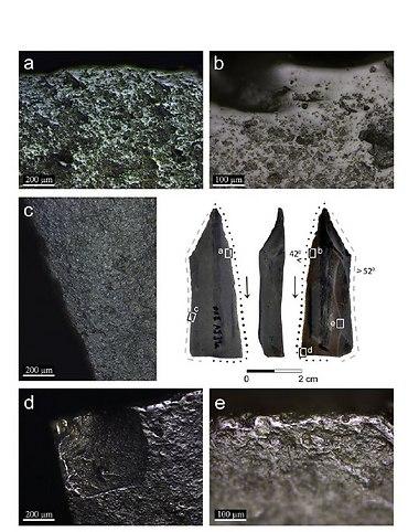הלהבים תחת המיקרוסקופ (צילום: באדיבות איריס גרומן-ירוסלבסקי ודני נדל)