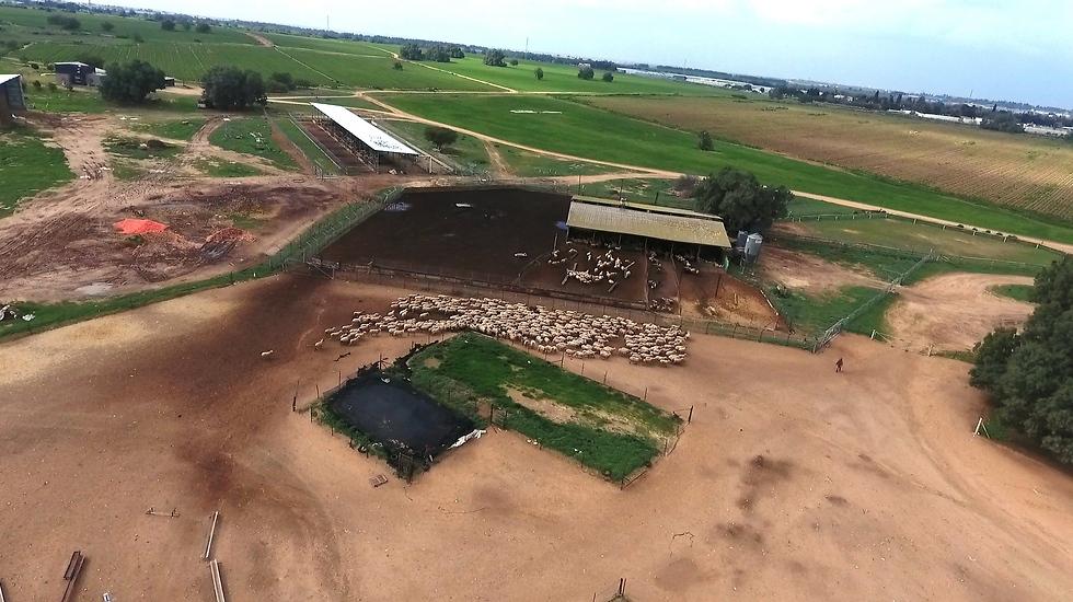 חוות משק צאן הסמוכה לנחל הבשור (צילום: אלי סגל)
