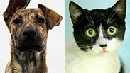 """צילום: הכלבים שבצל, חיים שוורצנברג, צער בעלי חיים בישראל - ת""""א"""