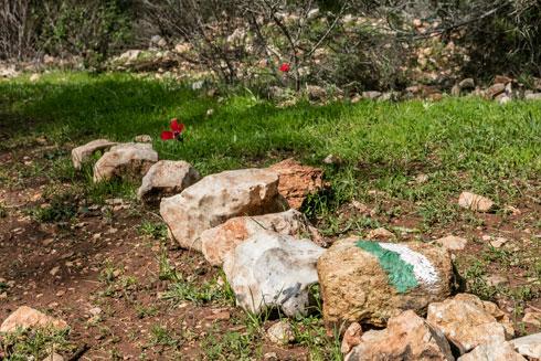 בשטח יש צמחייה טבעית וגם אתרים ארכיאולוגיים. למה למחוק אותם? (צילום: אינסה ביננבאום)