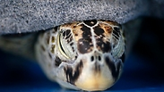 צילום: EPA/RUNGROJ YONGRIT