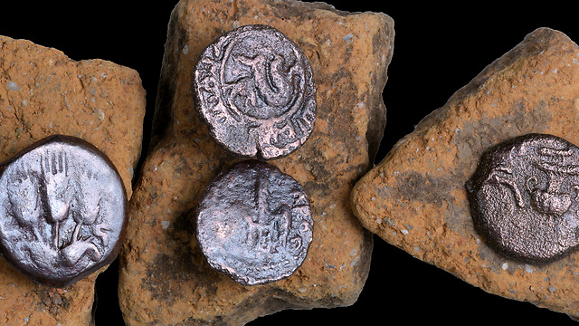 The ancient coins that were discovered in the excavation (Photo: Clara Amit, courtesy of IAA)