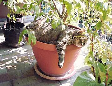משתזפים בשמש. חתולים אוהבים לבחור להם נקודה קבועה משלהם ( צילום: נורית חרמון )