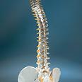 עמוד השדרה